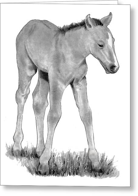 Joyce Geleynse Greeting Cards - Young Colt Standing Greeting Card by Joyce Geleynse