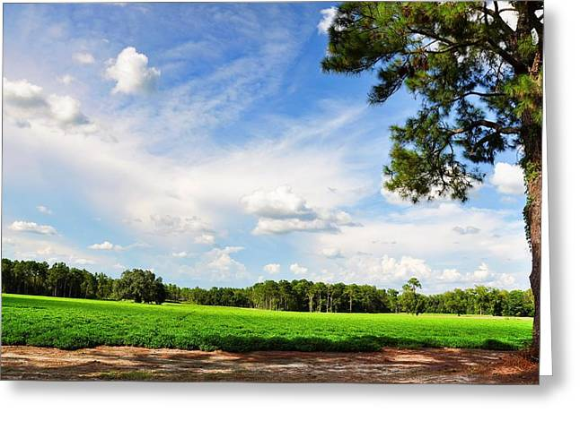 Georgia Cotton Fields Greeting Cards - Young Cotton Fields Greeting Card by Jan Amiss Photography