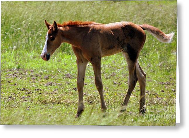 Young Foal Greeting Card by Marty Koch