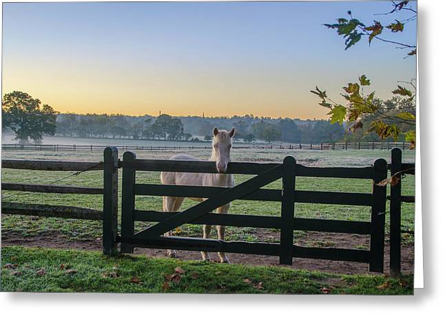Young Horse At Erdenheim Farms Greeting Card by Bill Cannon