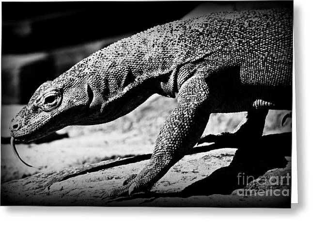 Coldblooded Greeting Cards - Young Komodo Greeting Card by Clare Bevan