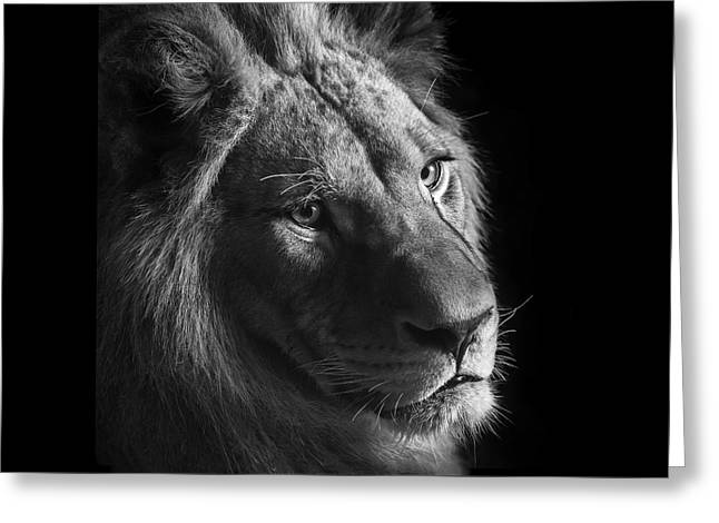 Young Lion In Black And White Greeting Card by Lukas Holas
