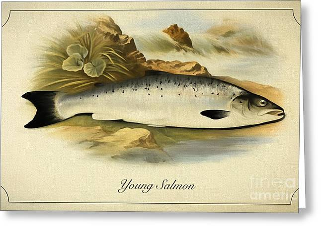 Salmon Drawings Greeting Cards - Young salmon fish Greeting Card by Evgeni Nedelchev