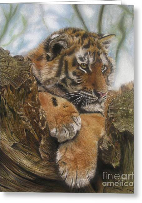 Wild Life Pastels Greeting Cards - Young Tiger Greeting Card by Sabine Lackner