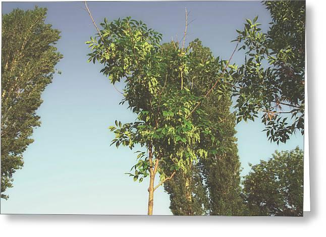 Spring Greening Greeting Cards - Young Tree Greeting Card by Svetlana Neskovska