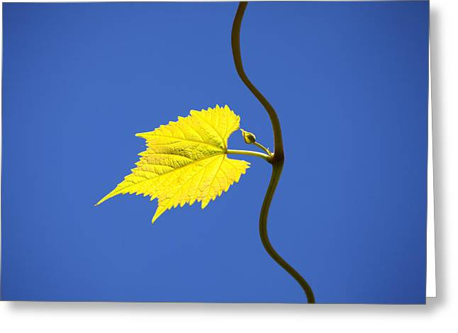Grape Vineyard Greeting Cards - Young Vine Leave Greeting Card by Matjaz Preseren