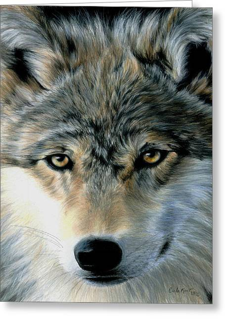 Wolves Drawings Greeting Cards - Young Wolf Greeting Card by Carla Kurt