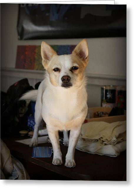 Dog Photographs Greeting Cards - Your Attention Please Greeting Card by Mandy Shupp