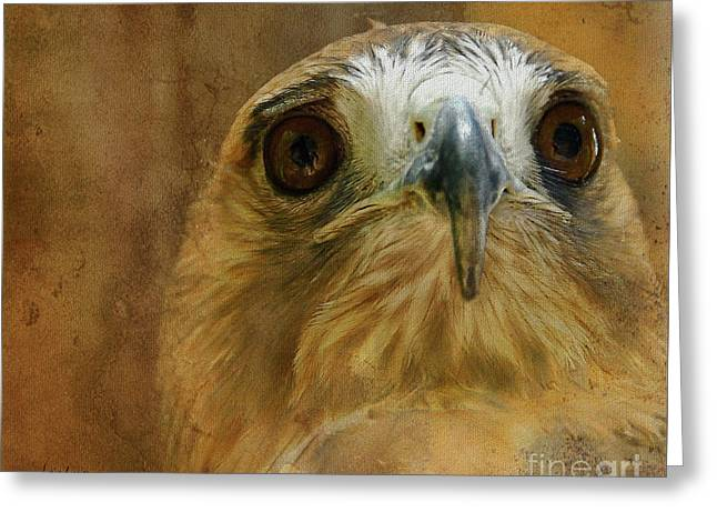 Red Tail Hawk Digital Greeting Cards - Your Majesty Greeting Card by Lois Bryan