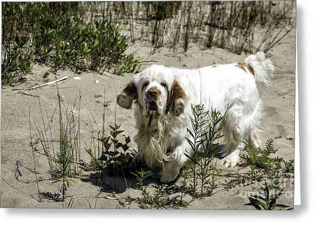 Manitoulin Greeting Cards - Youre On My Beach Greeting Card by Timothy Hacker