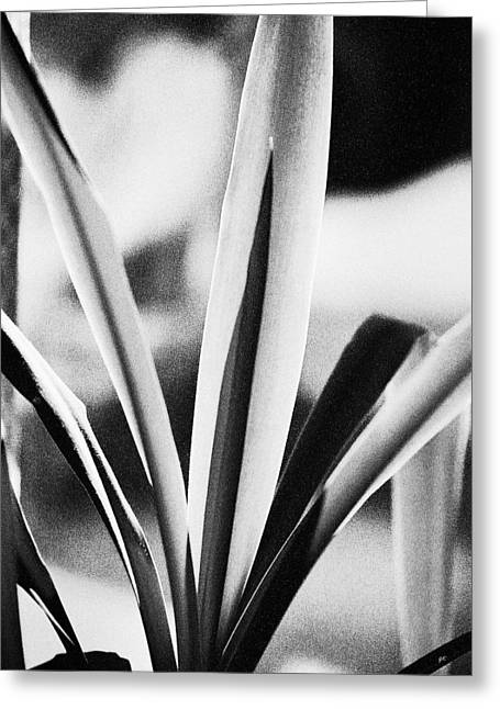 Plant Stretched Canvas Greeting Cards - Yucca Greeting Card by Gerlinde Keating - Keating Associates Inc