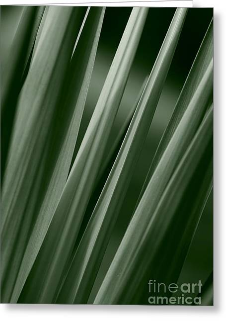 Jeannie Burleson Greeting Cards - Yucca Spikes Greeting Card by Jeannie Burleson