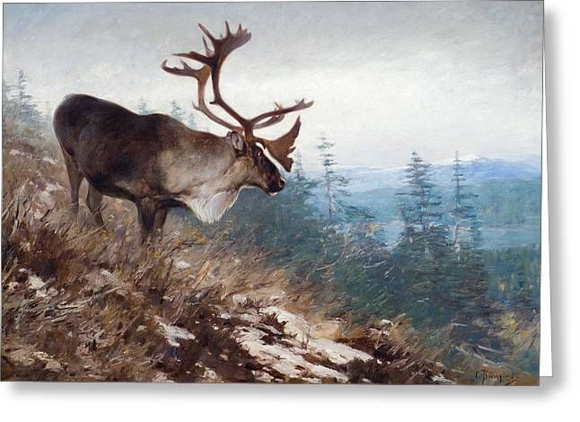 Vale Greeting Cards - Yukon King Caribou Greeting Card by Celestial Images