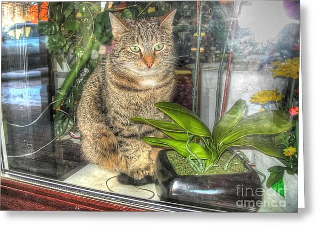 I Pyrography Greeting Cards - YURY BASHKIN all I see cat Greeting Card by Yury Bashkin