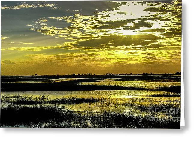 Zambesi Flood Greeting Card by Andrew Brixey
