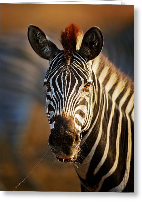 Equus Greeting Cards - Zebra close-up portrait Greeting Card by Johan Swanepoel