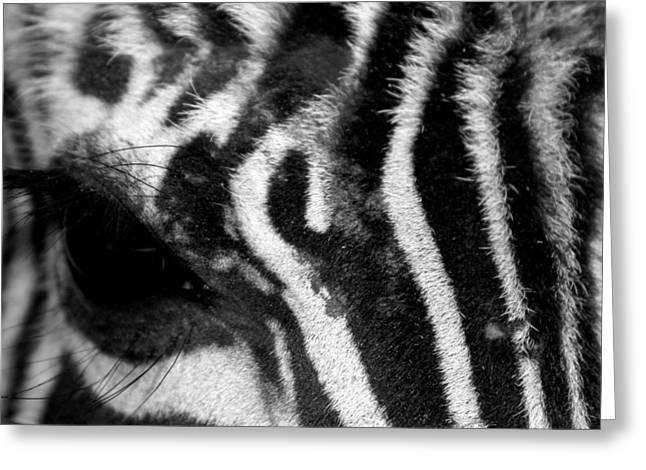 Dana Greeting Cards - Zebra Eye Greeting Card by Dana  Oliver