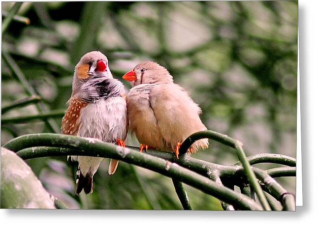 Zebra Finch Greeting Cards - Zebra Finch Colloquy Greeting Card by Rona Black