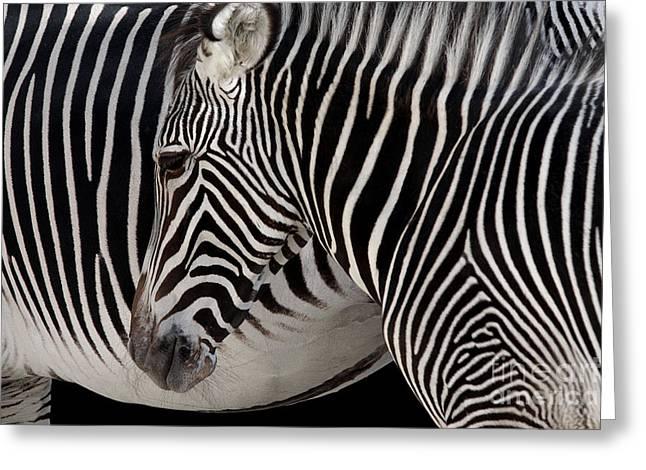 Zebra Head Greeting Card by Carlos Caetano