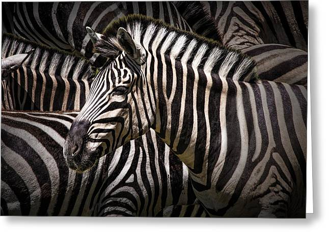 Randy Greeting Cards - Zebra lost among the Herd Greeting Card by Randall Nyhof