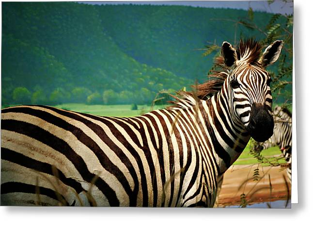 Zebra Face Greeting Cards - Zebra Greeting Card by Marilyn Hunt