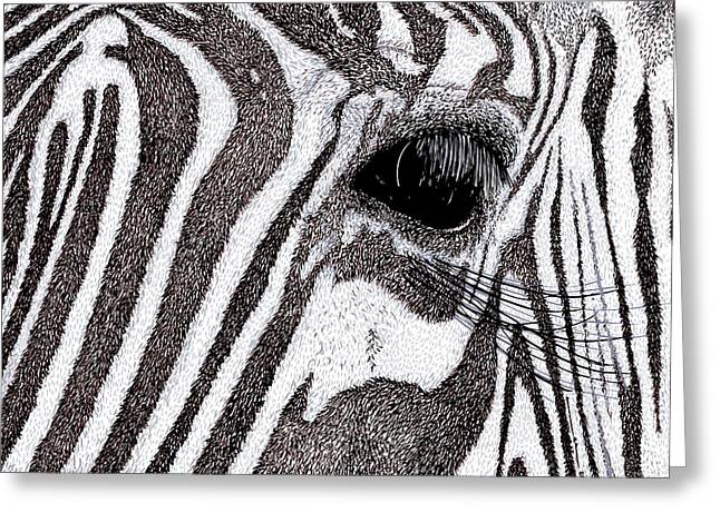 Zebra Portrait Greeting Card by Karl Addison