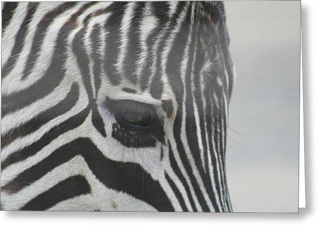 Zebra Face Greeting Cards - Zebra Greeting Card by Rob Cruise