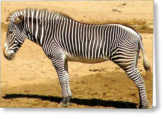 Pictures Of Zebras Greeting Cards - Zebra Stand Greeting Card by Debra     Vatalaro