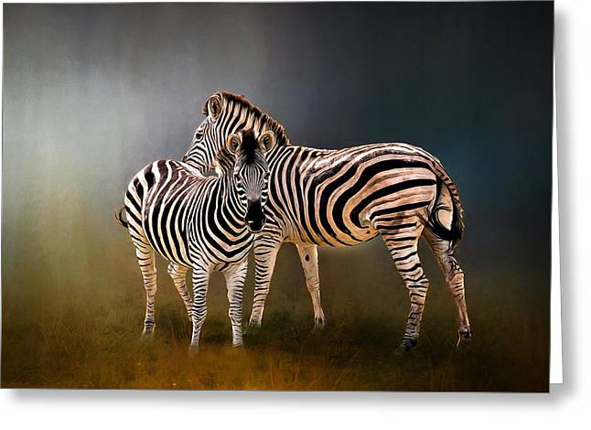 Nature Greeting Cards - Zebras Greeting Card by Maria Coulson