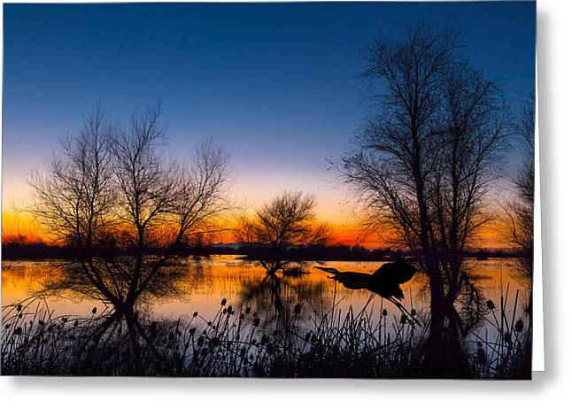 Trees Reflecting In Water Greeting Cards - Zen Dawn Greeting Card by Kathleen Bishop