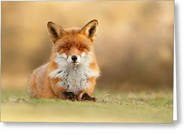 Sleepy Greeting Cards - Zen Fox 3.0 Greeting Card by Roeselien Raimond