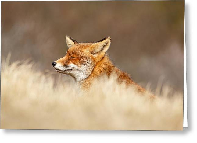 Moss Greeting Cards - Zen Fox 4.0 Greeting Card by Roeselien Raimond