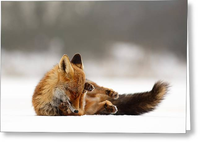 Zen Fox Series - Comfortably Fox Greeting Card by Roeselien Raimond