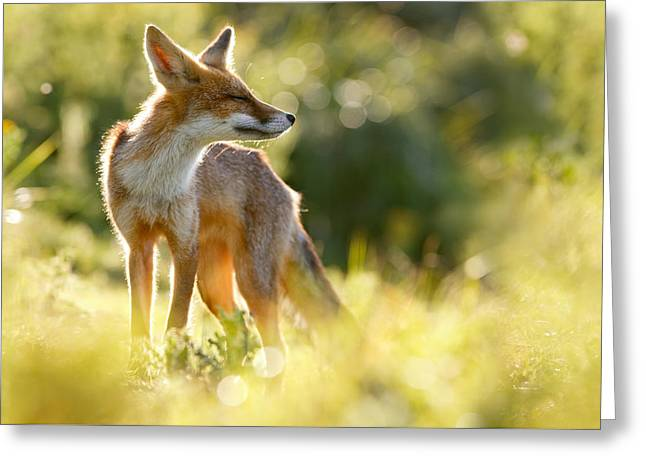 Canid Greeting Cards - Zen Fox Series - Happy Fox is Happy Greeting Card by Roeselien Raimond