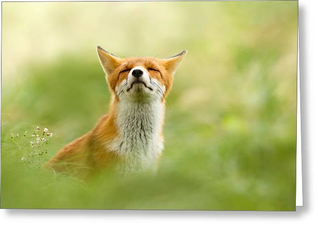 Zen Fox Series - Zen Fox Does It Agian Greeting Card by Roeselien Raimond