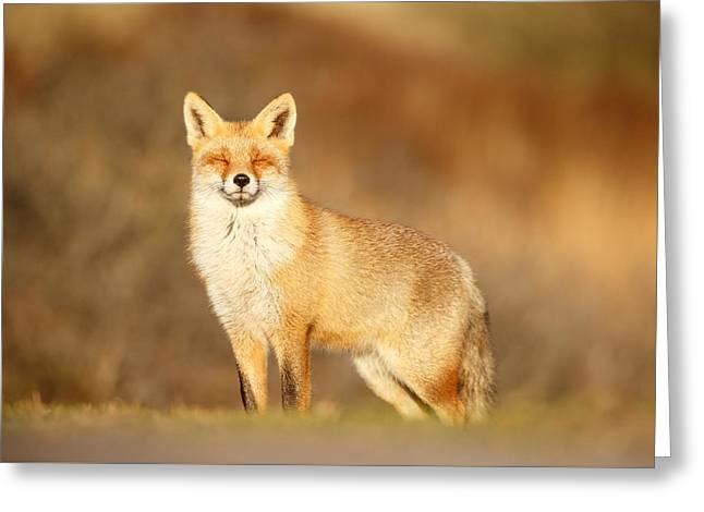Zen Fox Series - Zen Fox In Warm Sunlight Greeting Card by Roeselien Raimond