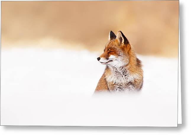 Red Eye Greeting Cards - Zen Fox Series - Zen Fox in Winter Mood Greeting Card by Roeselien Raimond