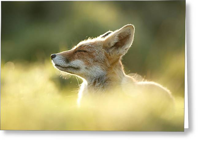Canid Greeting Cards - Zen Fox Series - Zen Fox Up Close Greeting Card by Roeselien Raimond