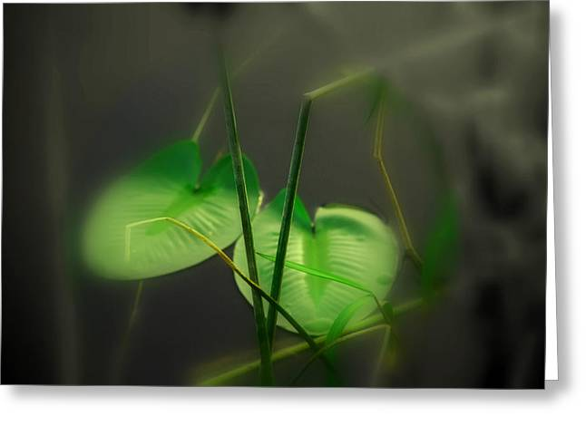 Water Lilly Greeting Cards - ZEN Photography IV Greeting Card by Susanne Van Hulst