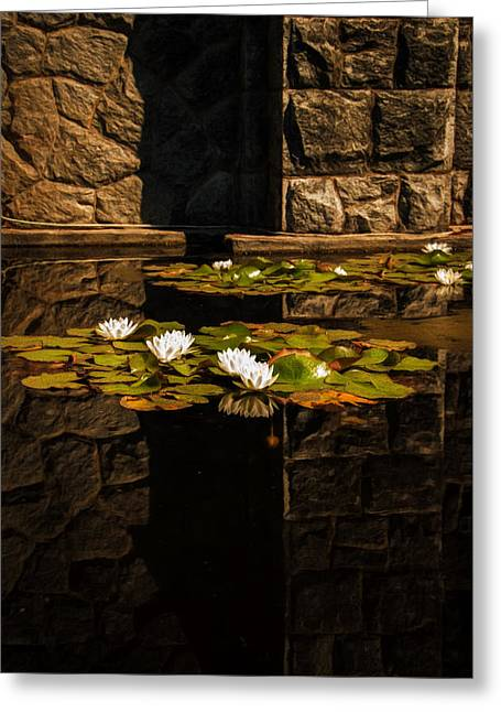 Water Lilly Greeting Cards - Zen Reflections 2 Greeting Card by Marilyn Wilson
