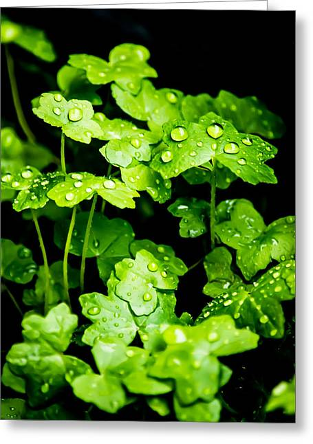 Rain Droplet Photographs Greeting Cards - Zen Waterdrops Greeting Card by Parker Cunningham