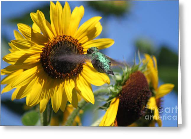 Yellow Sunflower Greeting Cards - Zeroing in on the Subject Matter Greeting Card by Cathy  Beharriell