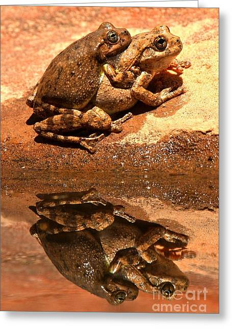 Brown Frog Greeting Cards - Zion Canyon Tree Frogs In Love Greeting Card by Adam Jewell