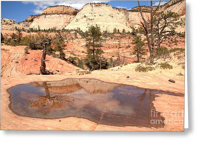 White Sandstone Greeting Cards - Zion East Landscape Reflections Greeting Card by Adam Jewell