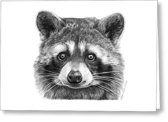 Wild Life Drawings Greeting Cards - 046 Zorro the Raccoon Greeting Card by Abbey Noelle