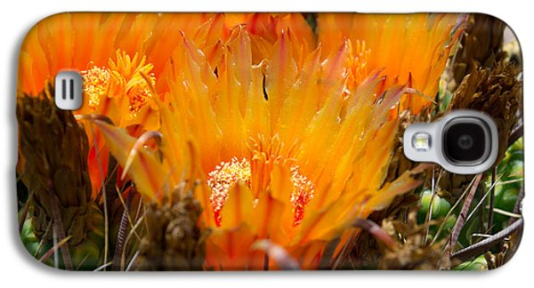 Print Glass Art Galaxy S4 Cases -  Candy Barrel Cactus Galaxy S4 Case by Beverly Guilliams