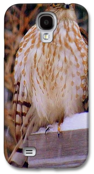 Landscape Acrylic Prints Galaxy S4 Cases - Coopers Hawk Flew In With The Winter Storm Galaxy S4 Case by Eunice Miller