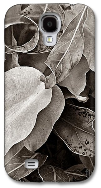 Abstract Forms Photographs Galaxy S4 Cases -   Primrose Seed Pods Galaxy S4 Case by Chris Berry