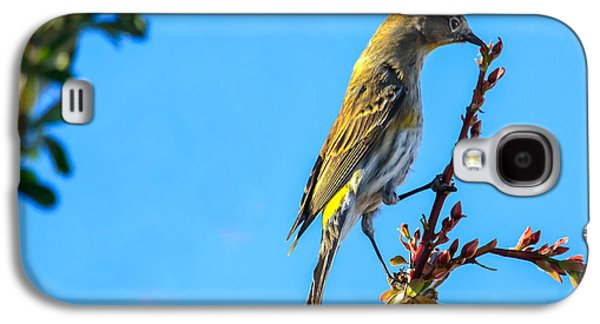 Haybale Galaxy S4 Cases -  Yellow-rumped Warbler Galaxy S4 Case by Robert Bales