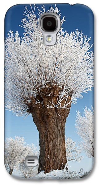 Willow Lake Photographs Galaxy S4 Cases - A frosted willow on a very cold and bright winter day Galaxy S4 Case by Roeselien Raimond